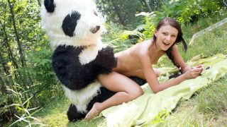 Bang-out Within The Forest With A Large Plaything Panda